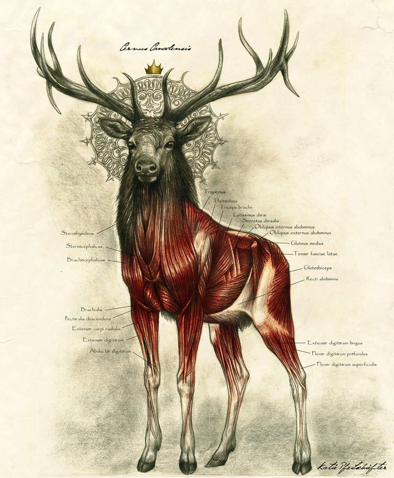 One of the most majestic anatomy illustrations we\'ve ever seen