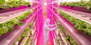 Illustration for article titled The World's Largest LED Hydroponic Farm Used to Be a Sony Factory