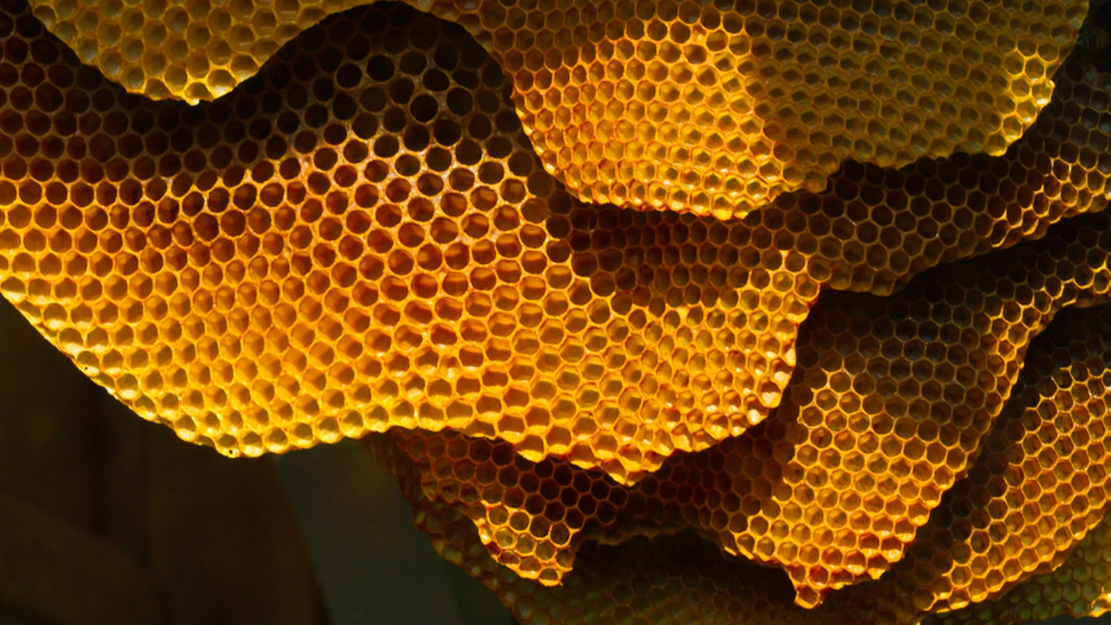 Why honey is the only food that doesn't go bad