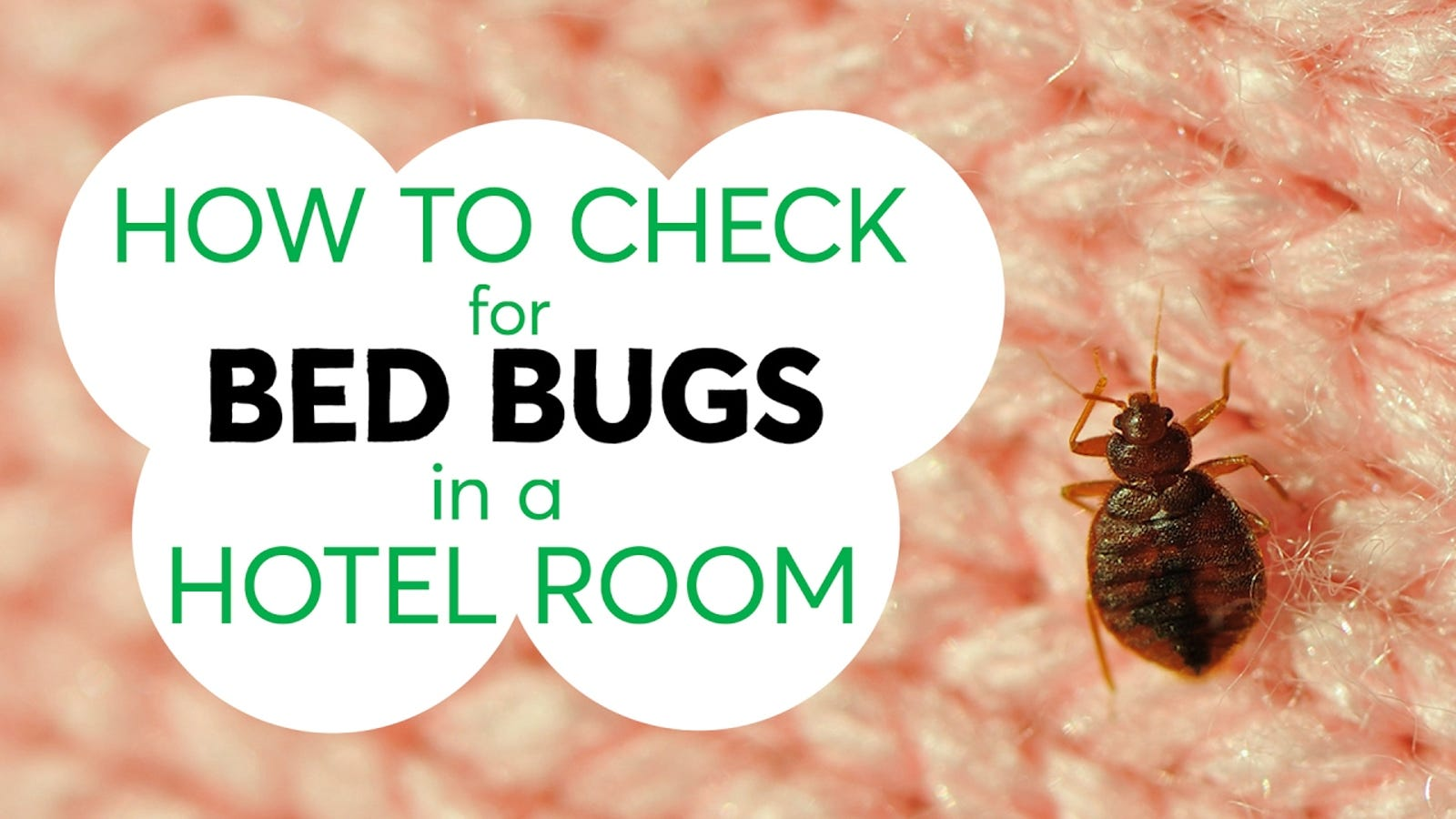 bed bug casting and mattress signs with bugs used on how in feces matter of to furniture shells picture fecal spot