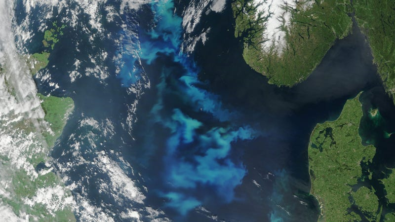 Illustration for article titled NASA Captures North Sea Algae in Full Bloom