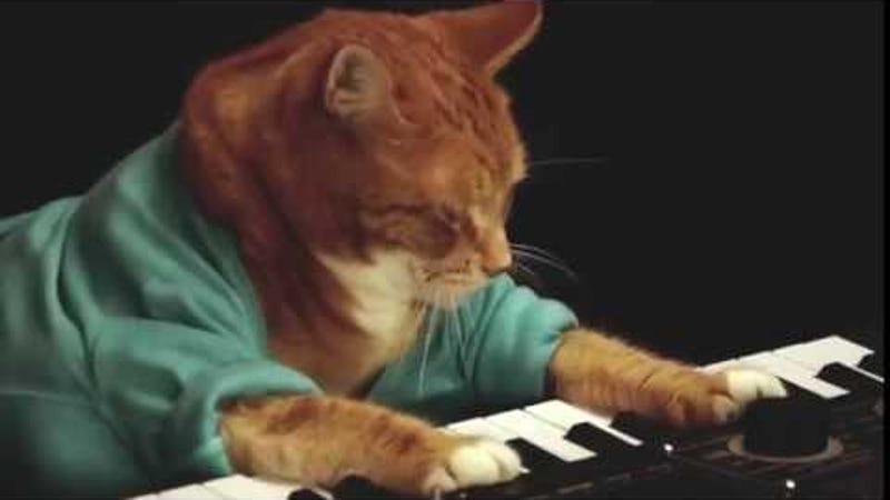 Saturday Night Social: Keyboard Cat Is Dead