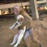 Illustration for article titled Hero Monkey Saves Puppy From Fire In China (UPDATE: Hoax?)
