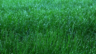Keep Your Lawn Green Without Wasting Money with These Watering Tips