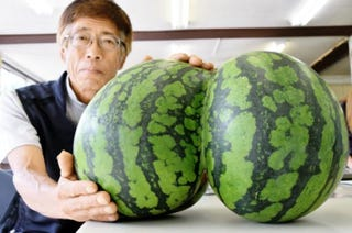 Illustration for article titled Check Out the Sexy Butt on These Watermelons