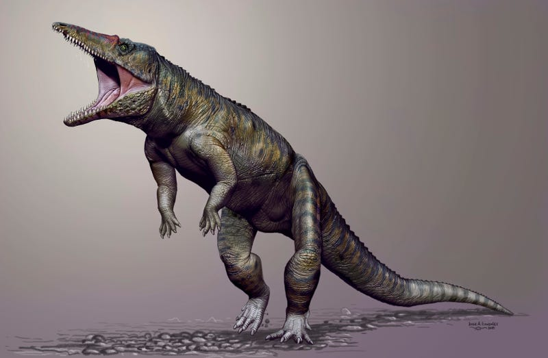 """Illustration for article titled """"Carolina Butcher"""" Was a Massive Croc That Hunted on its Hind Legs"""