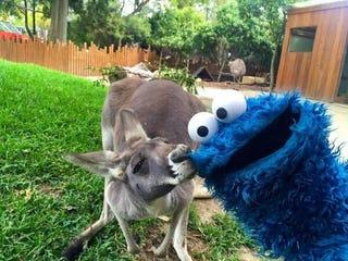 Looks like a certain Opponaut is on his Australian vacation.