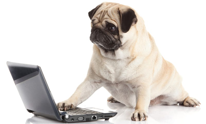Illustration for article titled Dog Starts House Fire After Turning On Stove, Setting Fire to Laptop