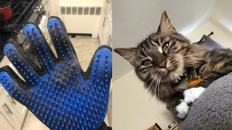 The DELOMO Pet Grooming Gloves; Jasper making his fellow Maine Coon ancestors proud (by waking me up at an ungodly hour).