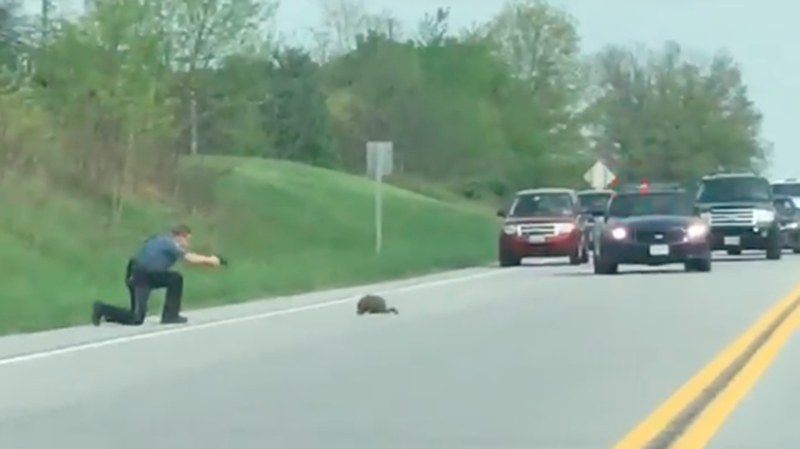 Illustration for article titled Vile Beast Groundhog Shot To Death By Valiant Officer of The Law