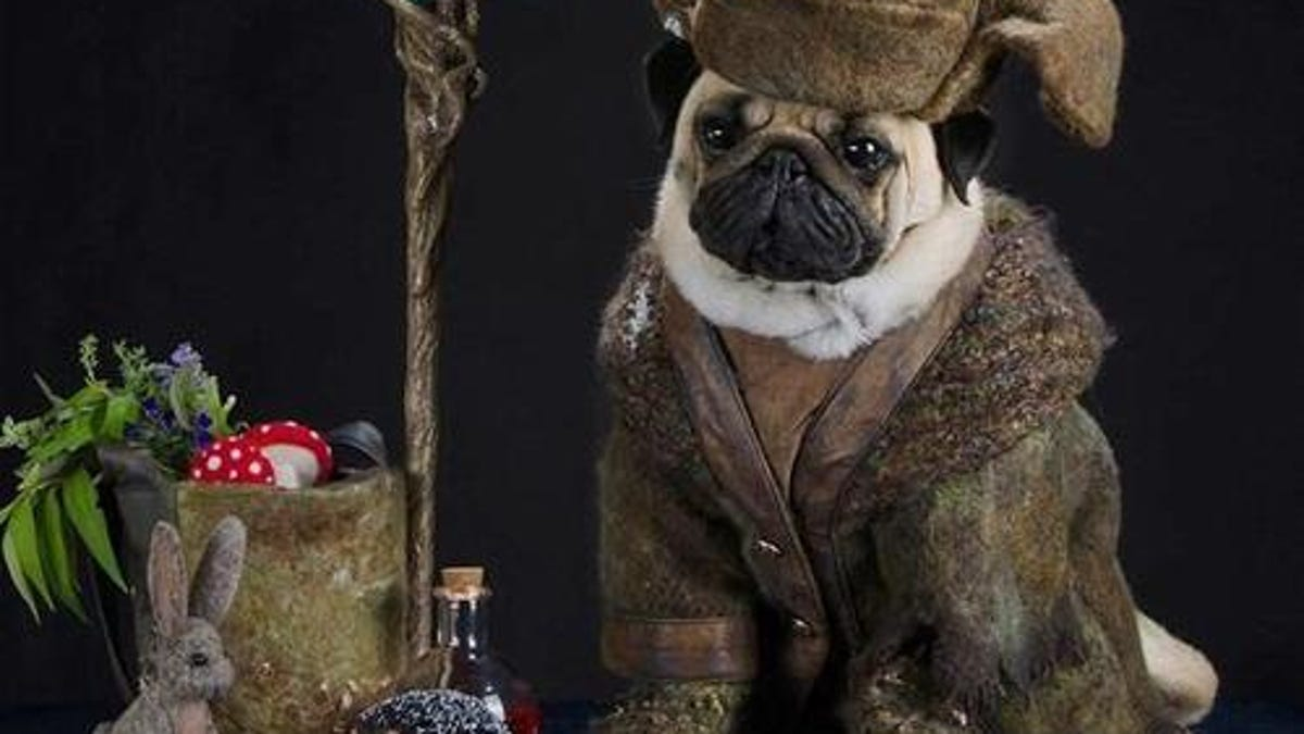 California couple dresses their pugs as Lord Of The Rings
