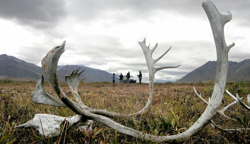 Tundra del Ártico. AP
