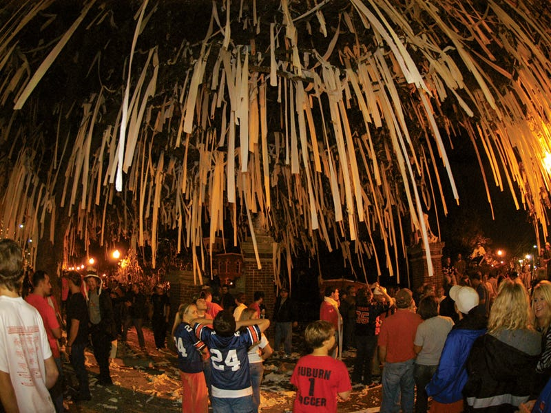 Illustration for article titled Pour One Out For Auburn's Trees Tonight