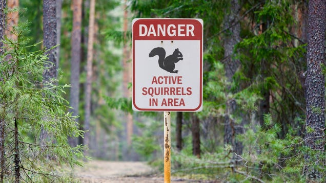 National Park Service Releases Detailed Guide On What Visitors Should Do Upon Encountering Squirrel