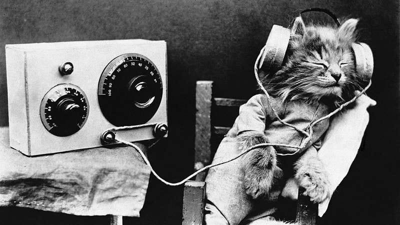 Tibby the cat (Photo: Hulton-Deutsch Collection/Corbis via Getty Images)