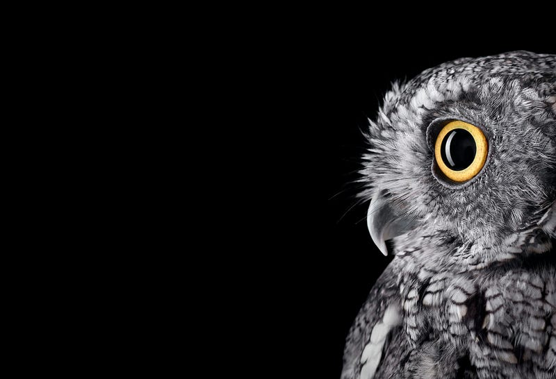 Illustration for article titled Take A Moment To Marvel At These Unusually Intimate Owl Portraits