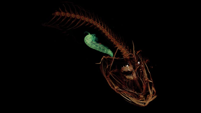 Worlds deepest living fish found five miles beneath the sea surface sciox Image collections