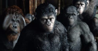 Illustration for article titled Planet Of The Apes Director Reveals What's Next For The Apes