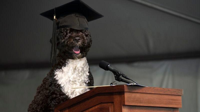 Illustration for article titled Bo Obama Addresses Graduates Of Dayton Obedience School