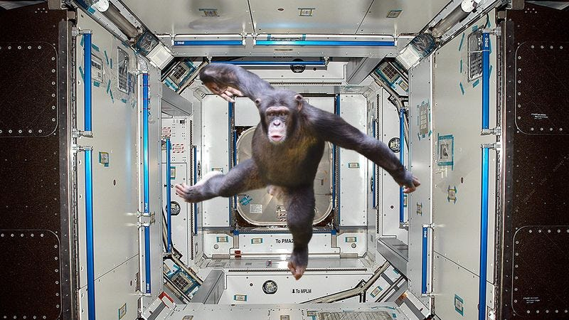 The chimp who has taken control of the International Space Station.