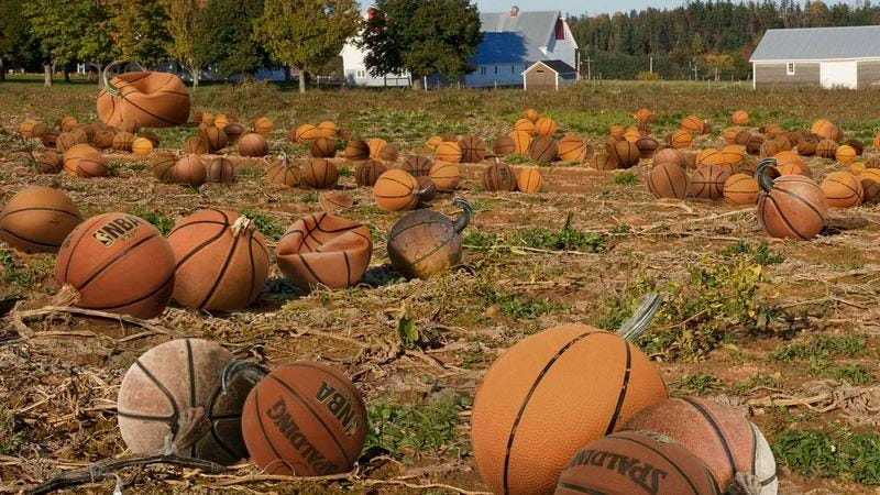 Illustration for article titled NBA Heads To Northeast Farms For Annual Basketball Picking
