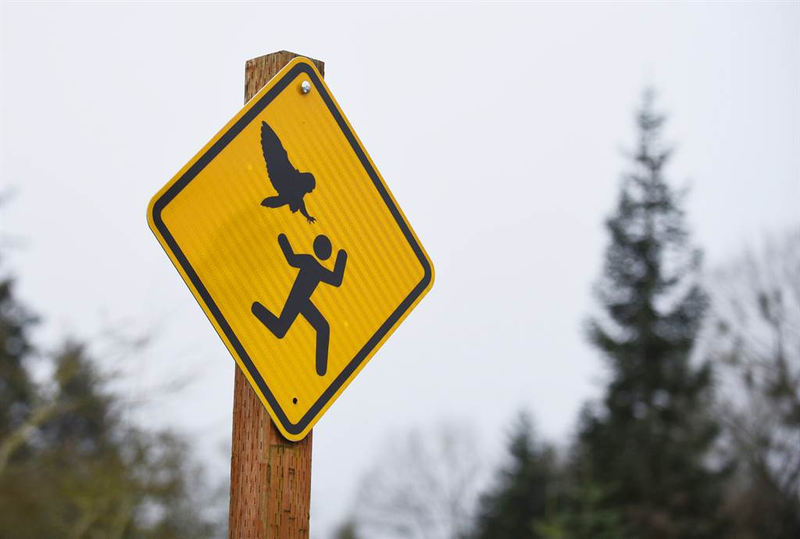 Illustration for article titled City's Owl Problem Got So Bad, It Had To Make This Awesome Sign