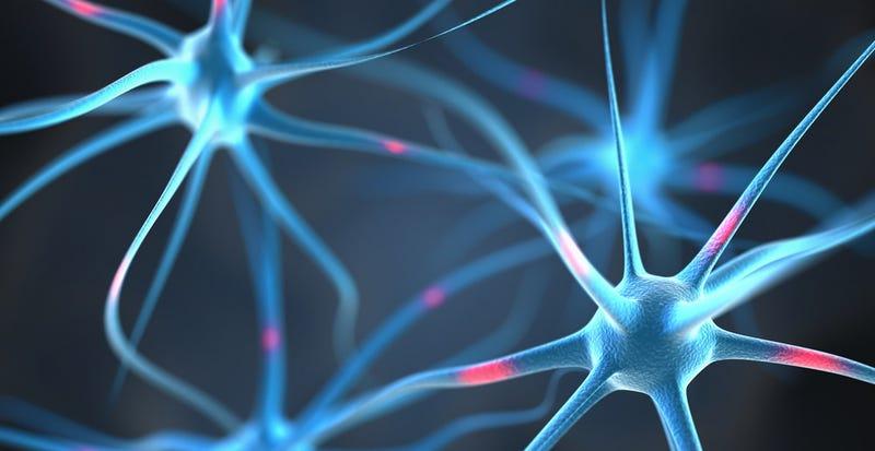 Descubren las neuronas que nos permiten predecir acciones de otros