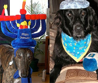 Illustration for article titled These Dogs Hate Hanukkagiving