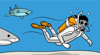 Illustration for article titled Texting and Driving? You'd Be Safer Swimming With Sharks