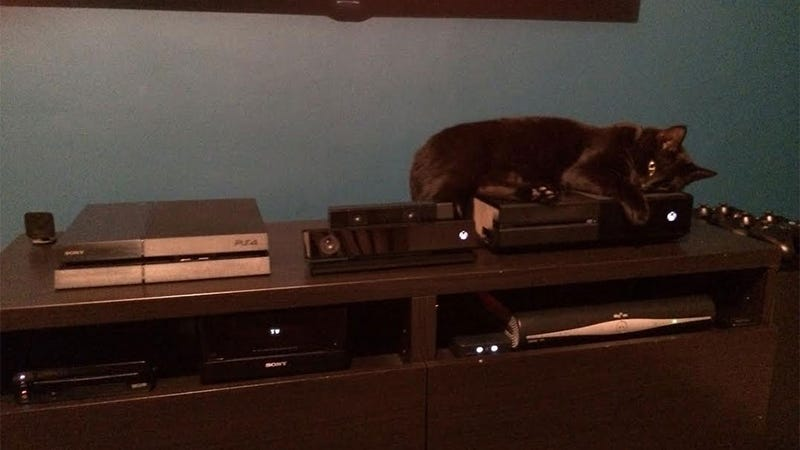 Illustration for article titled Idea: Let Cats Decide A Winner In The Console Wars