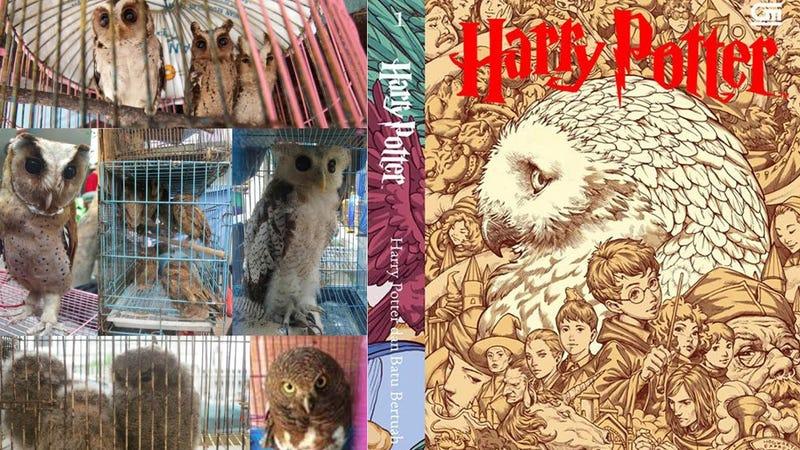 A la derecha, la portada de 'Harry Potter y la piedra filosofal' en Indonesia. A la izquierda, lechuzas a la venta en la isla de Java