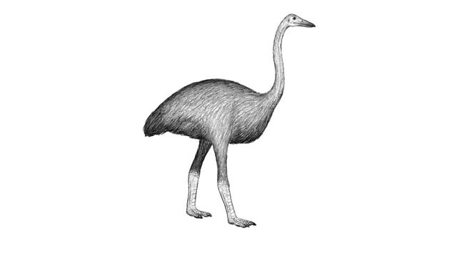 New Story, Same Big Old Bird