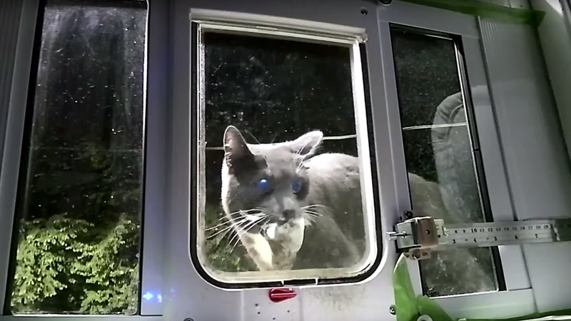Illustration for article titled This AI-Powered Cat Door Is a Brilliant Way to Keep a Kitty's Murder Presents Outside