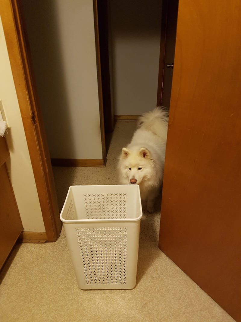 Illustration for article titled Dog is scared of the laundry hamper