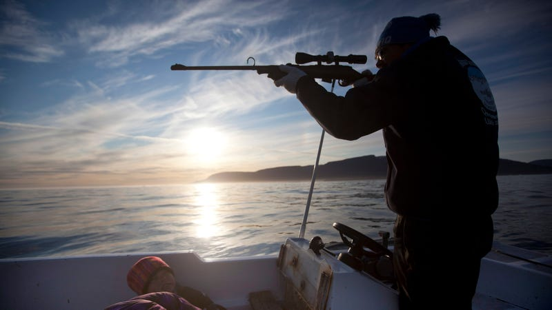 An Inuit hunter takes aim at a seal from a boat off the coast of Greenland.