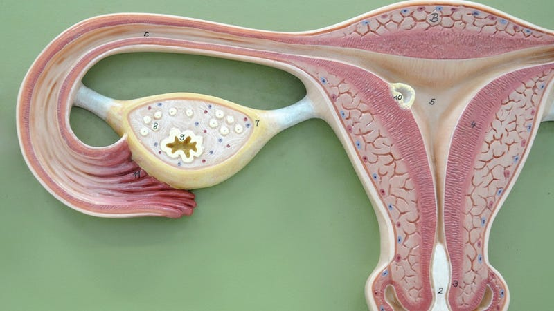 Kista ovarium dalam kehamilan pdf