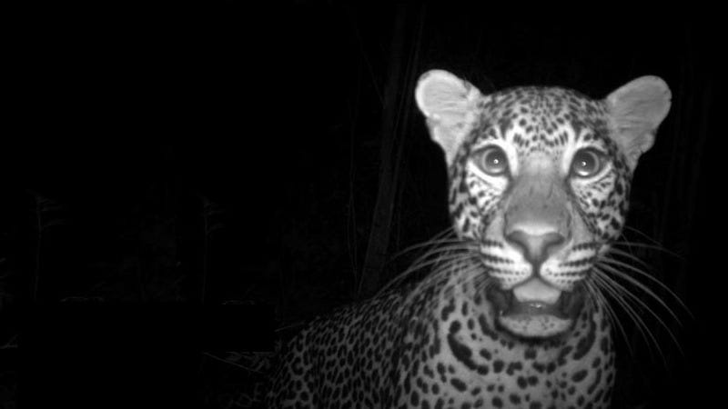 Illustration for article titled The Very Best Camera Trap Photography