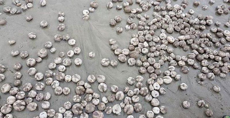 Illustration for article titled Qué son en realidad estas extrañas esferas que han aparecido a cientos en una playa británica