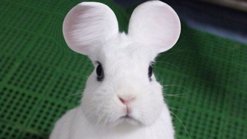 A rabbit with rounded ears. (Screenshot: YouTube)