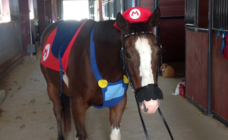 Illustration for article titled Sad Horse Is Dressed As Mario