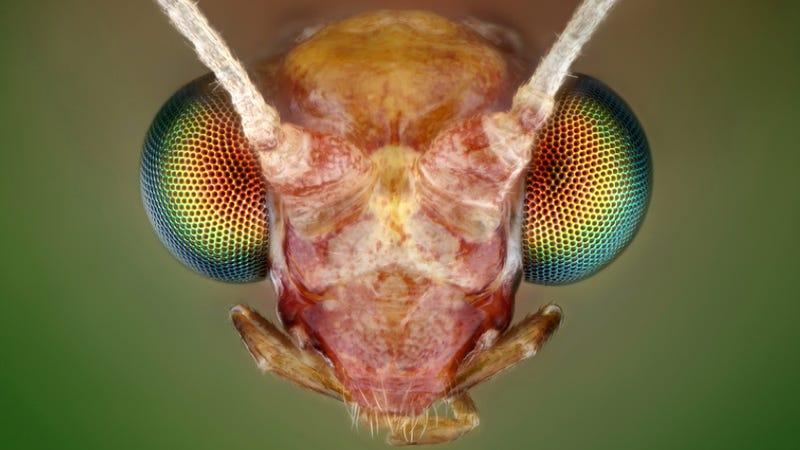 Illustration for article titled Some of the Most Gorgeous Macrophotography We've Seen in Ages