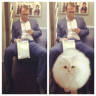 Illustration for article titled Men Who Take Up Too Much Room on the Subway Are Just Saving It for Cats
