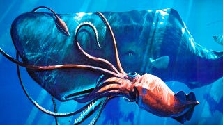Illustration for article titled Squids evolved giant eyes to watch out for sperm whales