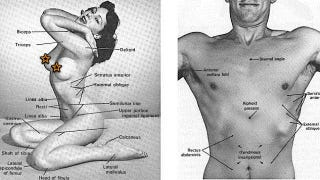 Illustration for article titled In 1971, Duke University professors wrote a wank-friendly medical textbook