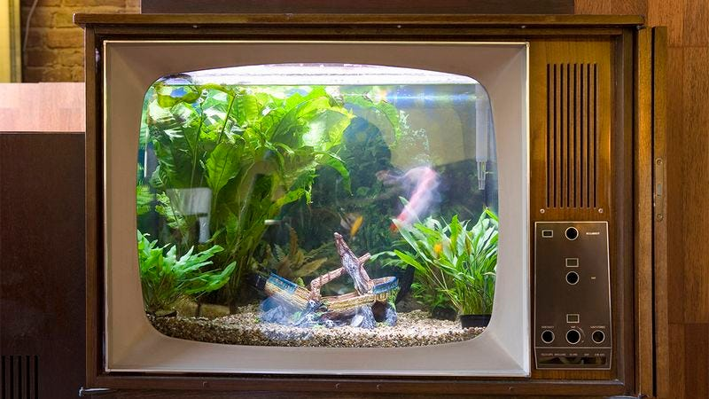 Illustration for article titled Incredible: This Very Crafty Man Turned His Television Into A Fish Tank, But That Was The Last We Heard From Him. Hope He's Okay.