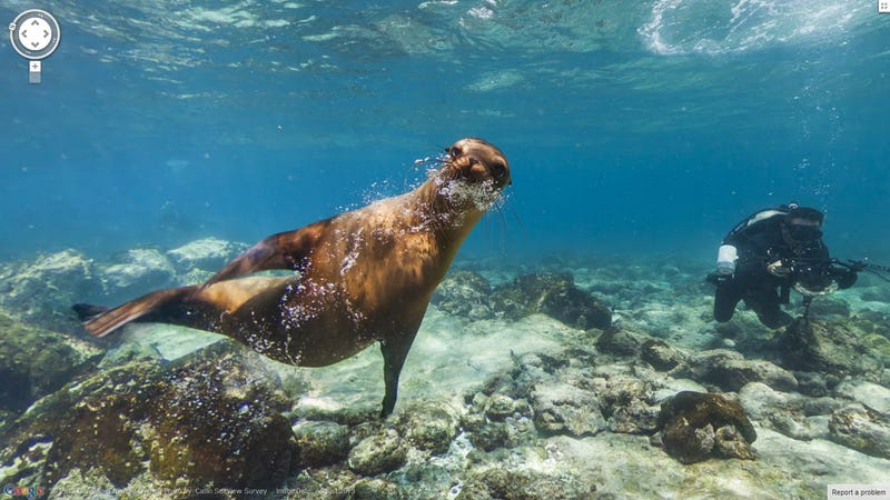 Illustration for article titled Nézz körbe a Galápagos-szigeteken a foteledből!