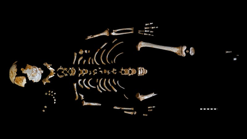 The remarkably well-preserved skeleton of a seven-year-old Neanderthal boy. (Image: Paleoanthropology Group MNCN-CSIC)