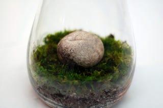 Make a Moss Terrarium for Low-Maintenance Greenery