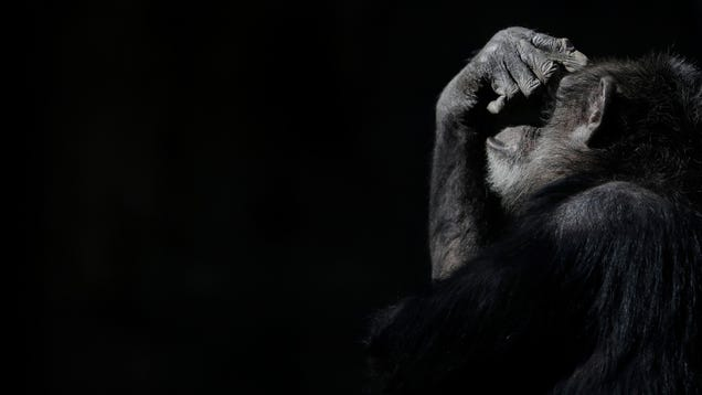 Signs of Alzheimer's Detected in Brains of Chimps For First Time