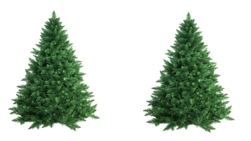 Illustration for article titled Is Cloning the Key to Perfect Christmas Trees?